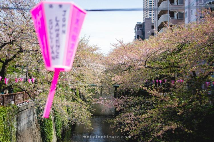 Photographe gwendoline noir Nakameguro japon tokyo sakura-10