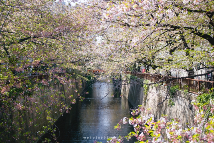 Photographe gwendoline noir Nakameguro japon tokyo sakura-15