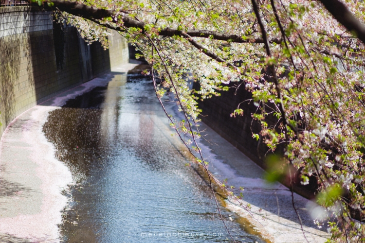 Photographe gwendoline noir Nakameguro japon tokyo sakura-5