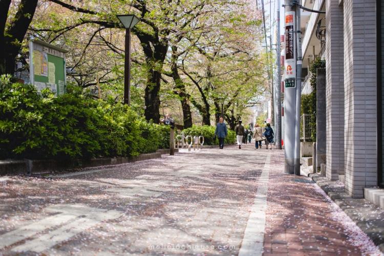 Photographe gwendoline noir Nakameguro japon tokyo sakura-6