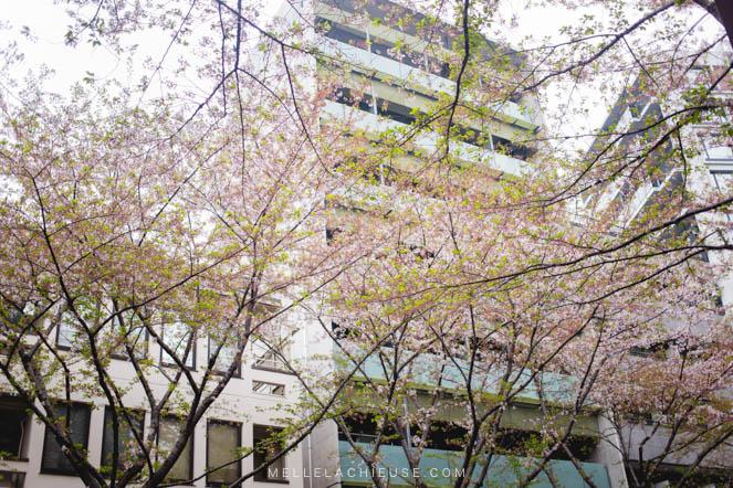 Photographie Japon Nakano araiyakushi-2