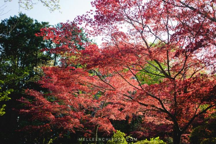kamakura-blog-japon-voyage-tokyo-buddha-49