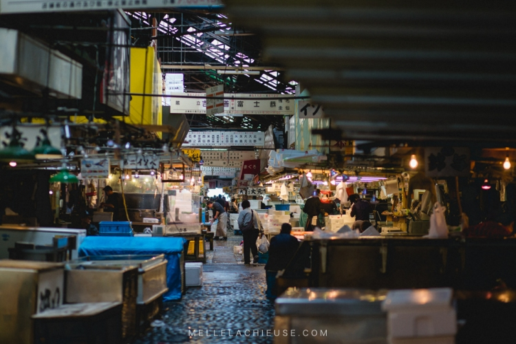 photographe-lyon-japon-tsukiji-marche-aux-poissons-japan-fishmarket-25