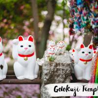 JAPON // Gotokuji , le temple des chats