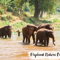 THAILANDE // ELEPHANT NATURE PARK